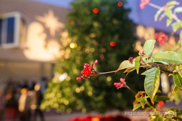 La Navidad ilumina Orihuela Costa 13