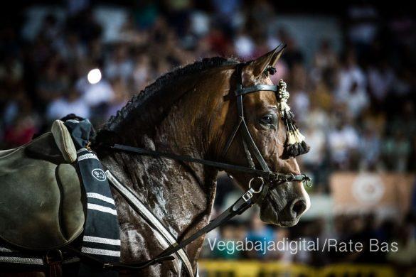 La espectacularidad de los caballos hechiza a los asistentes a FEGADO 68
