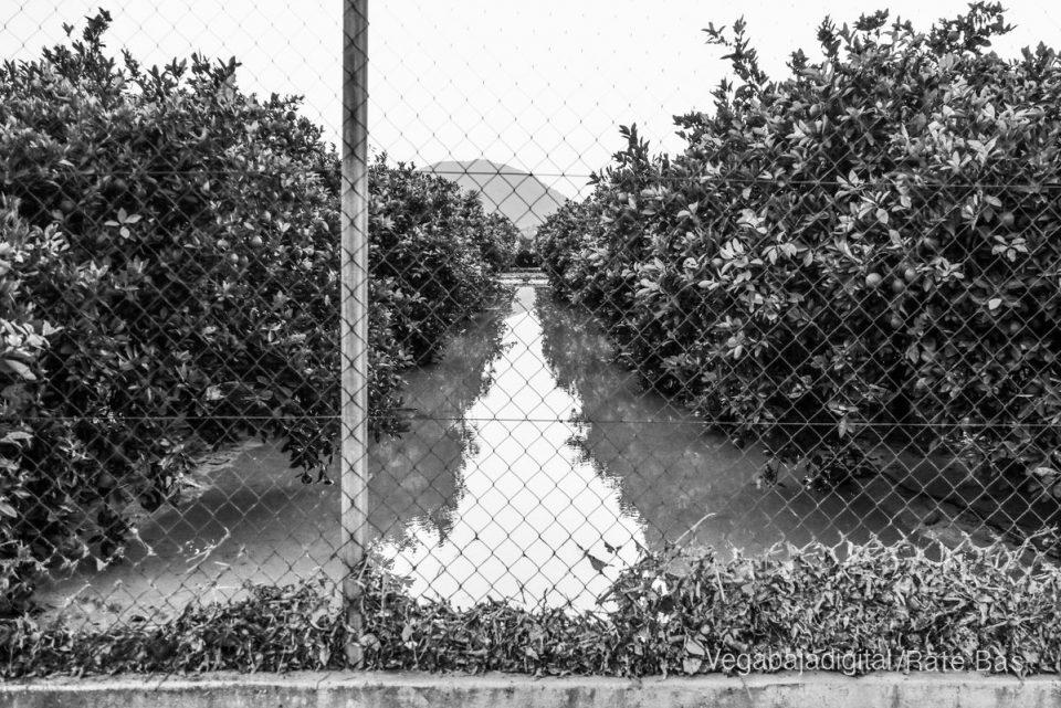 Llegan 4 millones del Ministerio de Agricultura para paliar daños de la DANA 6