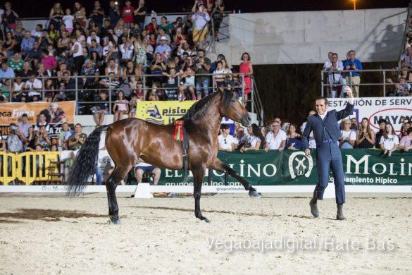 La espectacularidad de los caballos hechiza a los asistentes a FEGADO 54