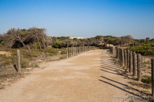 Guardamar, gran destino turístico en imágenes 43