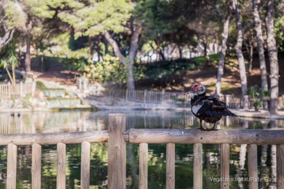 Guardamar, gran destino turístico en imágenes 44