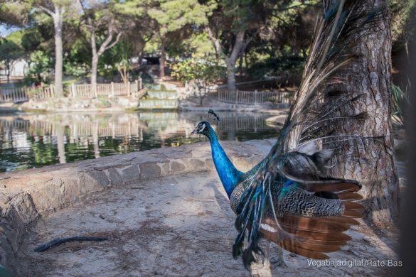 Guardamar, gran destino turístico en imágenes 45