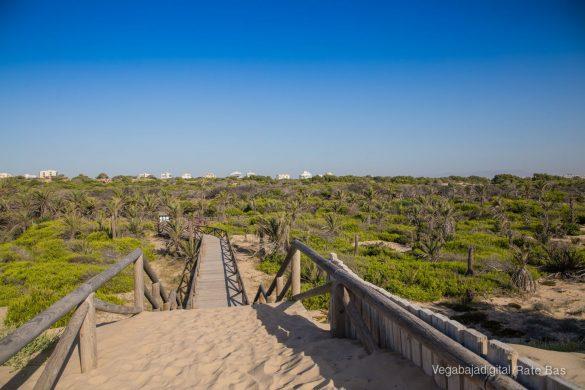 Guardamar, gran destino turístico en imágenes 50