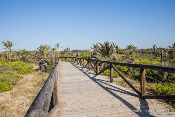 Guardamar, gran destino turístico en imágenes 54