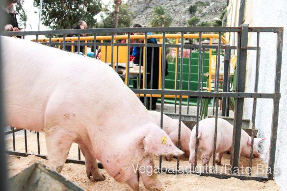 La mejores imágenes de las fiestas de San Antón en Orihuela 25