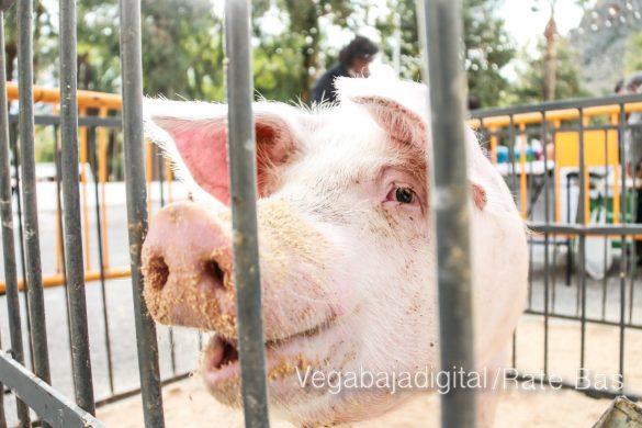 La mejores imágenes de las fiestas de San Antón en Orihuela 26