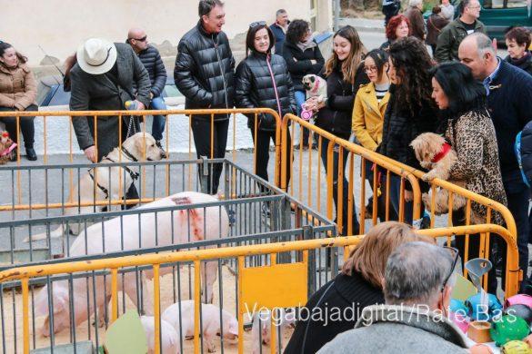 La mejores imágenes de las fiestas de San Antón en Orihuela 31