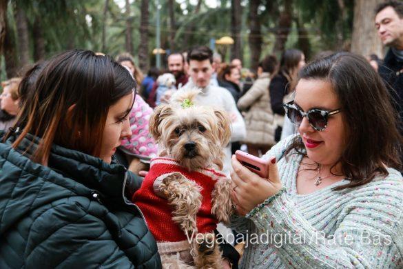 La mejores imágenes de las fiestas de San Antón en Orihuela 34