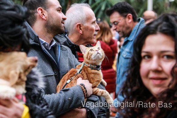 La mejores imágenes de las fiestas de San Antón en Orihuela 35