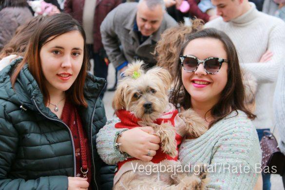 La mejores imágenes de las fiestas de San Antón en Orihuela 38
