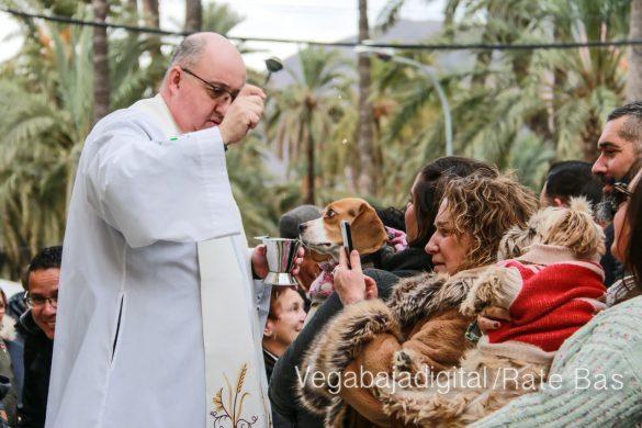 La mejores imágenes de las fiestas de San Antón en Orihuela 43