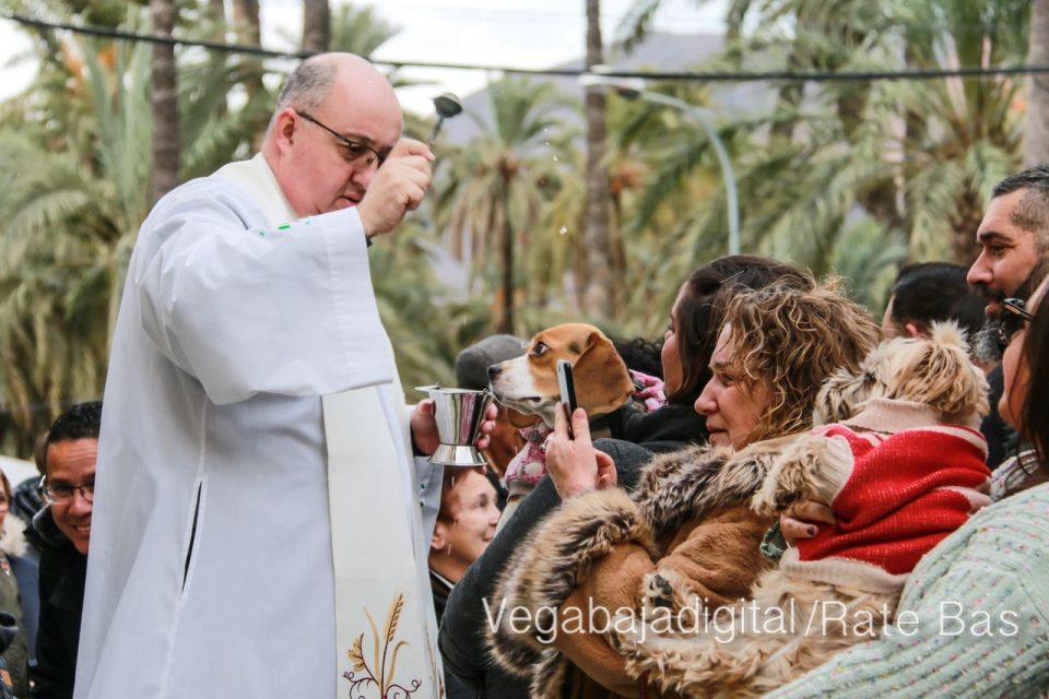 La mejores imágenes de las fiestas de San Antón en Orihuela 6