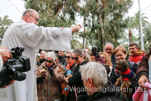 La mejores imágenes de las fiestas de San Antón en Orihuela 44