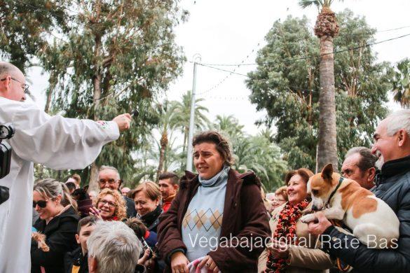 La mejores imágenes de las fiestas de San Antón en Orihuela 45