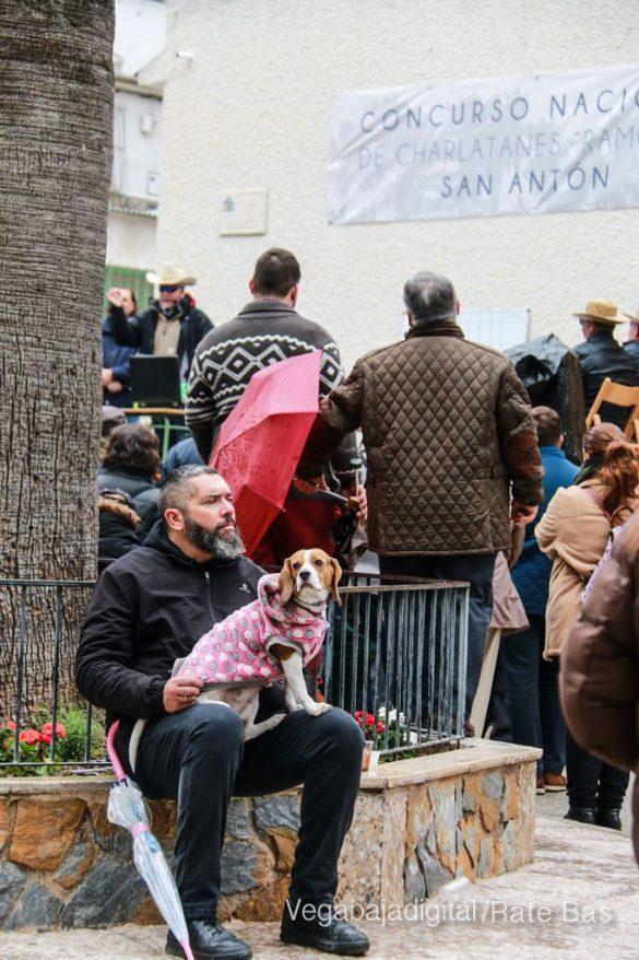 La mejores imágenes de las fiestas de San Antón en Orihuela 78