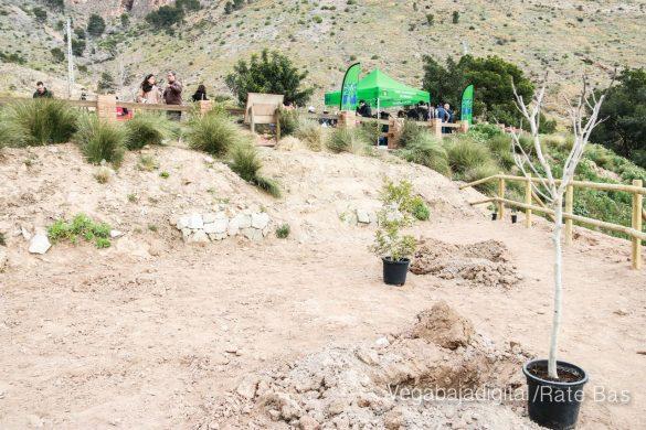 Los escolares de Orihuela reforestan el monte de San Miguel 12