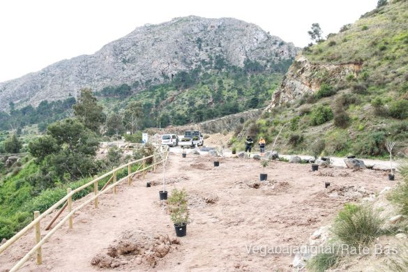 Los escolares de Orihuela reforestan el monte de San Miguel 14