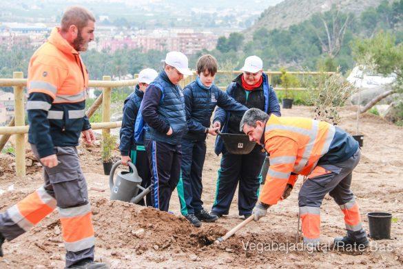 Los escolares de Orihuela reforestan el monte de San Miguel 25