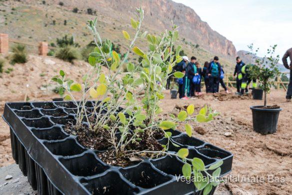 Los escolares de Orihuela reforestan el monte de San Miguel 35