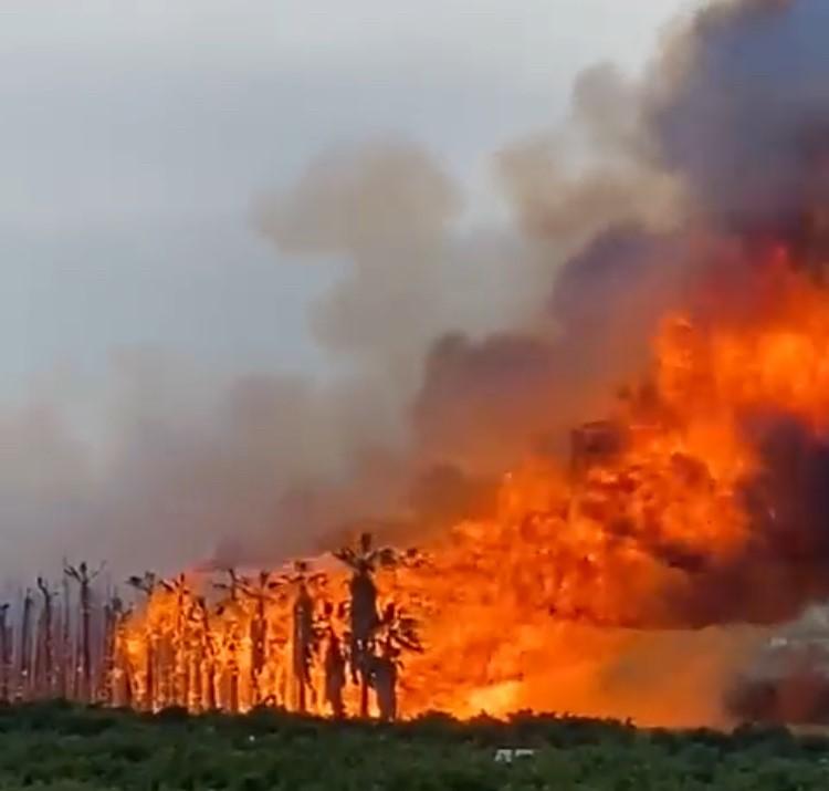 Los bomberos intervienen en dos incendios en Orihuela 6