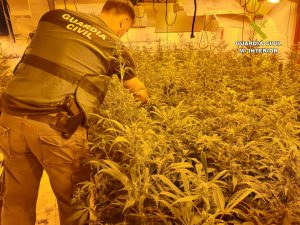 Detenidos 12 traficantes de drogas que ocupaban casas de la Vega Baja para cultivar 7
