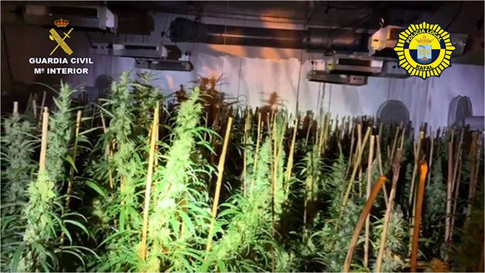 La Guardia Civil desmantela un cultivo de droga cerca del retén de la Policía Local de Rafal 6