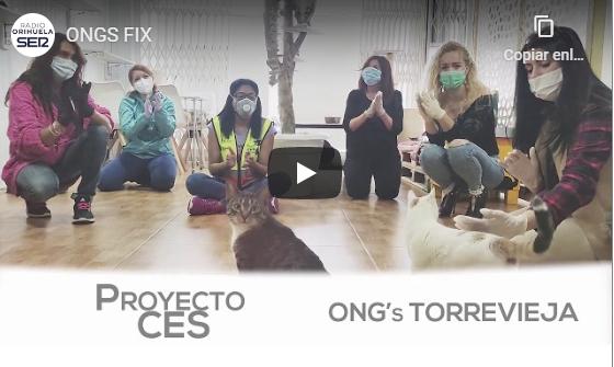 Torrevieja reconoce a las ONG's y voluntarios que se han involucrado durante la pandemia 6