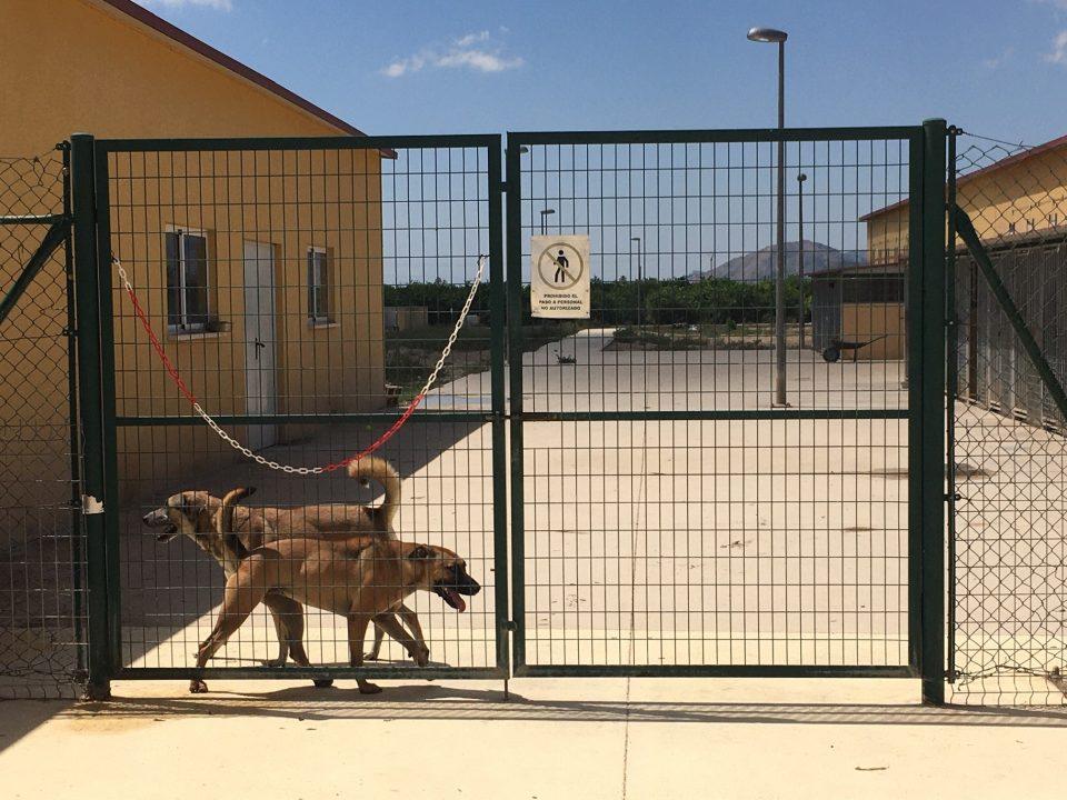 El abandono animal aumenta en la Vega Baja antes del inicio del verano 6