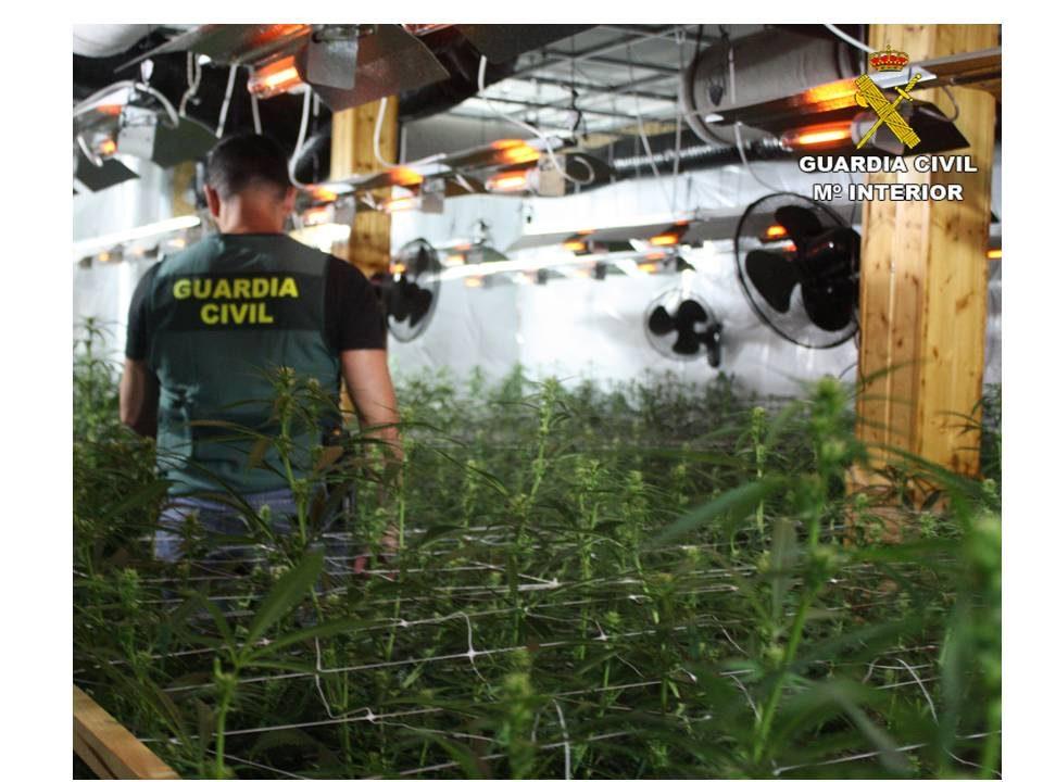 Desarticulada una banda criminal y traficante de droga con plantaciones en Albatera 6