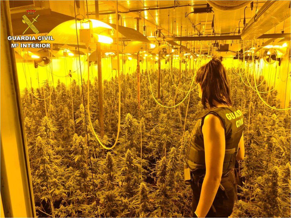 La Guardia Civil investiga a un vecino en Bigastro por una plantación de marihuana en su patio interior 6