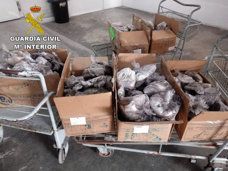 La Guardia Civil interviene 800 kilos de pescado irregular en Torrevieja 6