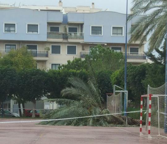 Cae una palmera en el parque de la Ocarasa por el viento 6