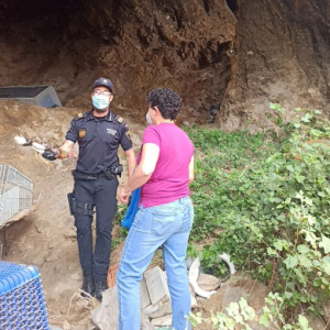 Desmantelan un criadero de gallos de pelea en Orihuela 7