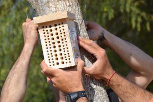 Rojales realiza plantaciones e instala polinizadores para aumentar la biodiversidad 7