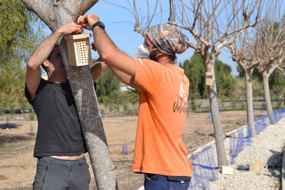 Rojales realiza plantaciones e instala polinizadores para aumentar la biodiversidad 6