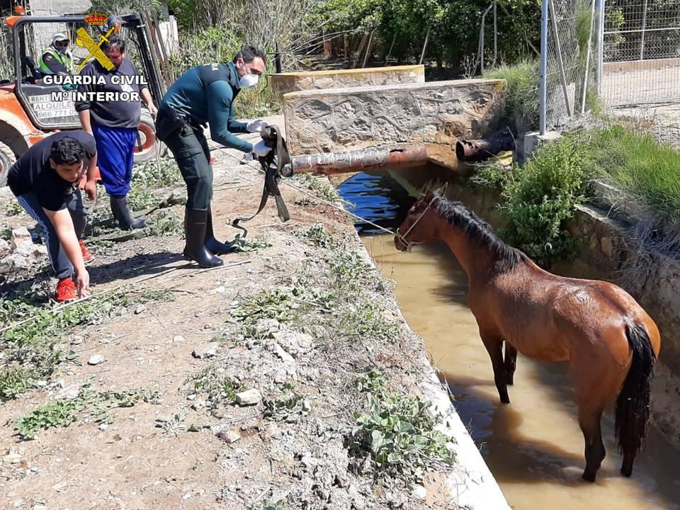 La Guardia Civil rescata a un caballo tras caer en una acequia de Jacarilla 6