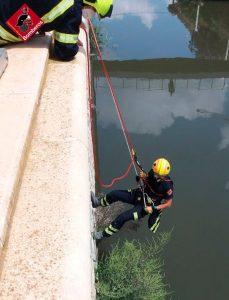 Los bomberos rescatan a un gato atrapado en el río en Orihuela 8