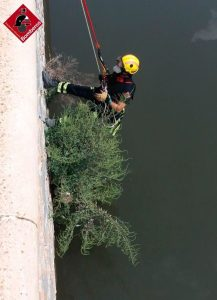 Los bomberos rescatan a un gato atrapado en el río en Orihuela 9
