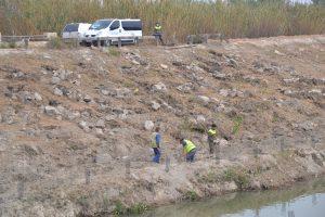 La CHS ejecutará un proyecto en el río Segura aguas abajo de Rojales para eliminar el cañaveral 7