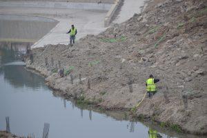La CHS ejecutará un proyecto en el río Segura aguas abajo de Rojales para eliminar el cañaveral 8