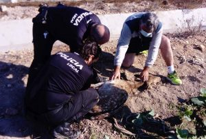 Rescatan un ejemplar de gamo en San Fulgencio 7