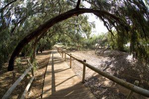 Regresan las rutas ecoturísticas nocturnas en el Parque Natural de las Lagunas de Torrevieja y La Mata 9