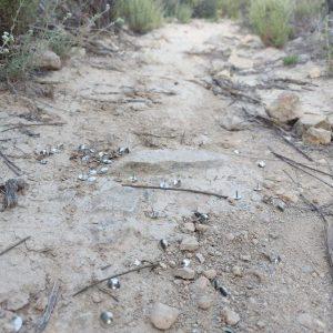 La Policía Local de Orihuela detecta chinchetas en una senda ciclista en la Dehesa de Pinohermoso 7