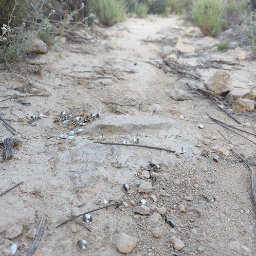 La Policía Local de Orihuela detecta chinchetas en una senda ciclista en la Dehesa de Pinohermoso 6