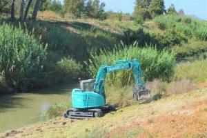 Limpieza de cañas y carrizo en el tramo del río entre Almoradí y Algorfa 7