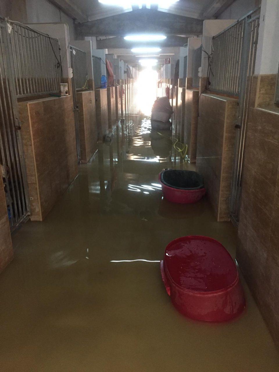 Asoka Orihuela necesita comida para los animales tras las inundaciones 6