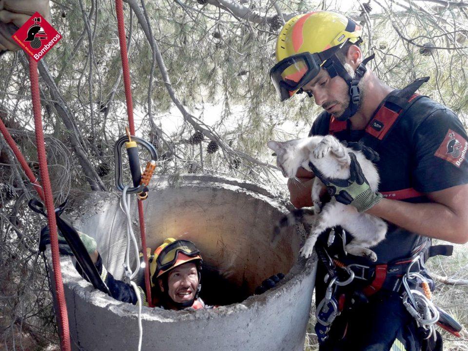 Un gato cae en un pozo en Albatera y los Bomberos vuelven a realizar un rescate heroico 6