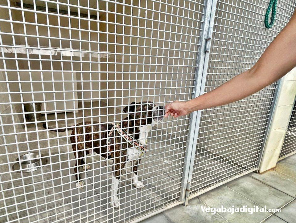 El poder de la voz de los que cuidan a los animales que nadie quiere cuidar 6