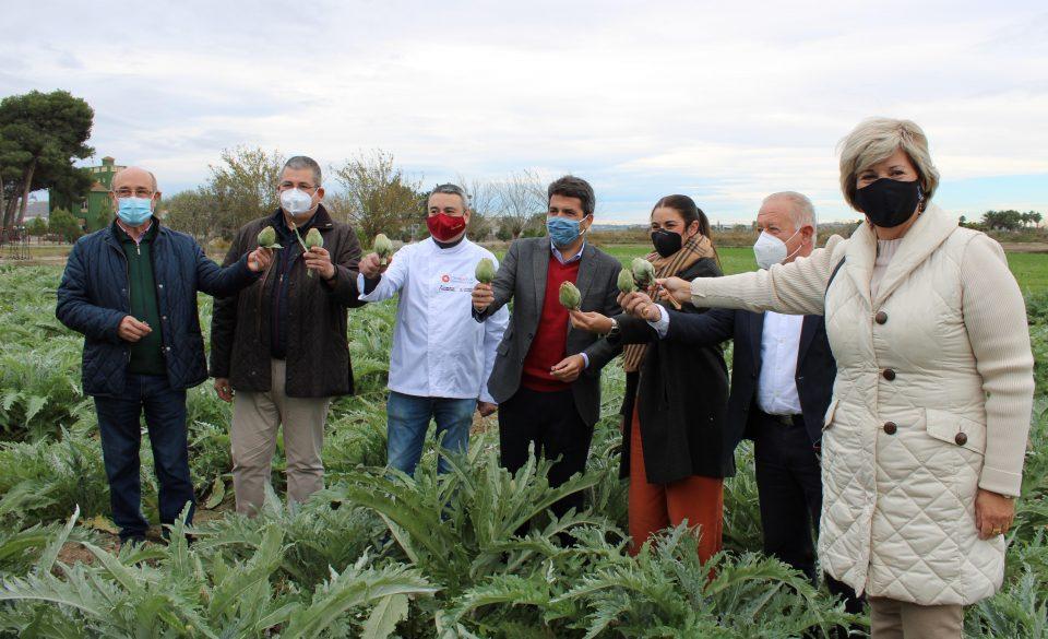 Arranca la temporada de alcachofa en la Vega Baja, todavía con secuelas de la DANA 6